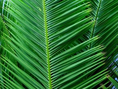 palm-54467_960_720